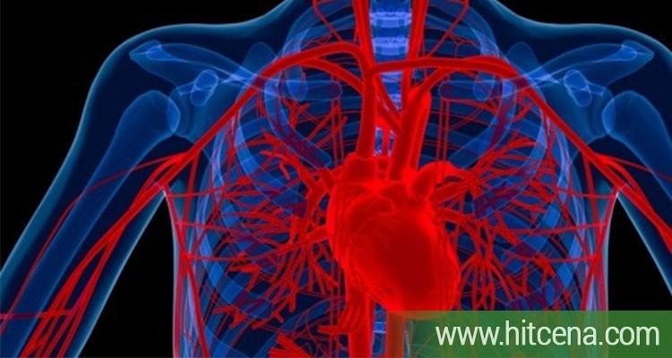 Vaskularni doppler skrining, vaskularni doppler skrining popusti, dopler krvnih sudova, dr nestorov, hitcena.com